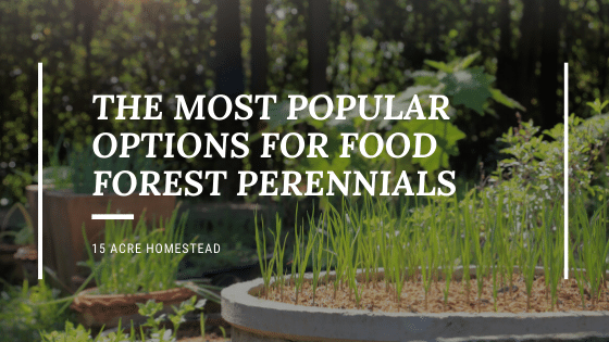 perennials for the food forest