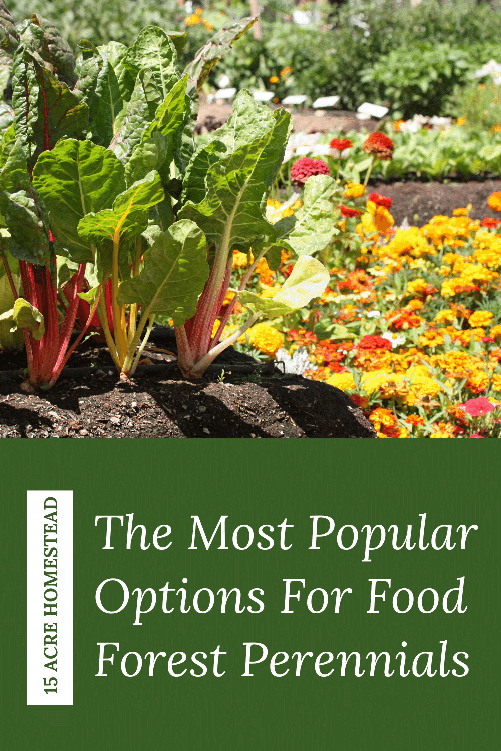 Choosing the perennials for your edible food forest on your homestead can be a lot of fun. This post shares some options that grow well in most climates.