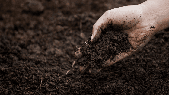 Adding compost from vermicompost bin to the soil