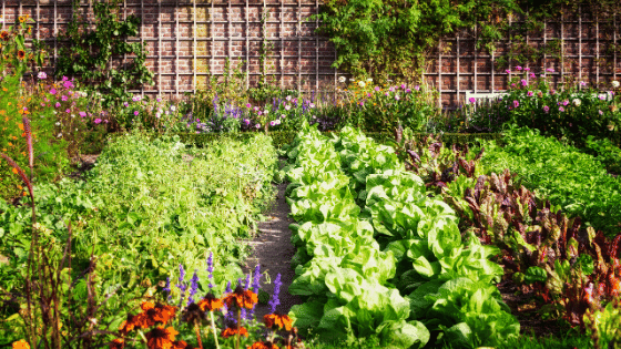 an edible food forest
