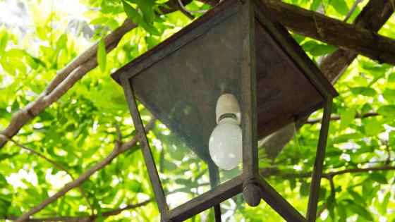 Lantern hanging in a tree.
