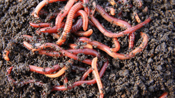 Feature for Vermicomposting
