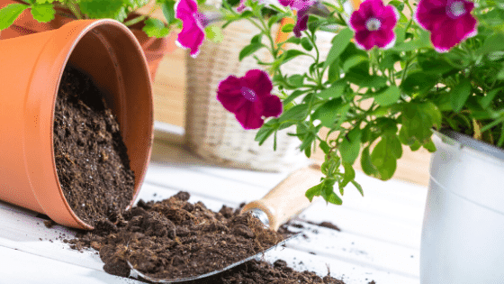 adding to pots for planting