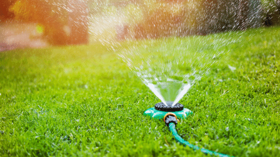 Sprinklers are a great way to water a large area of your edible food forest at one time.