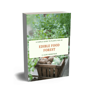 A Simple Guide To A Food Forest