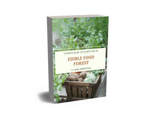 Food Forest E-book Cover