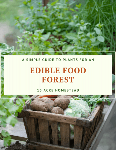 Edible Food Forest Ebook