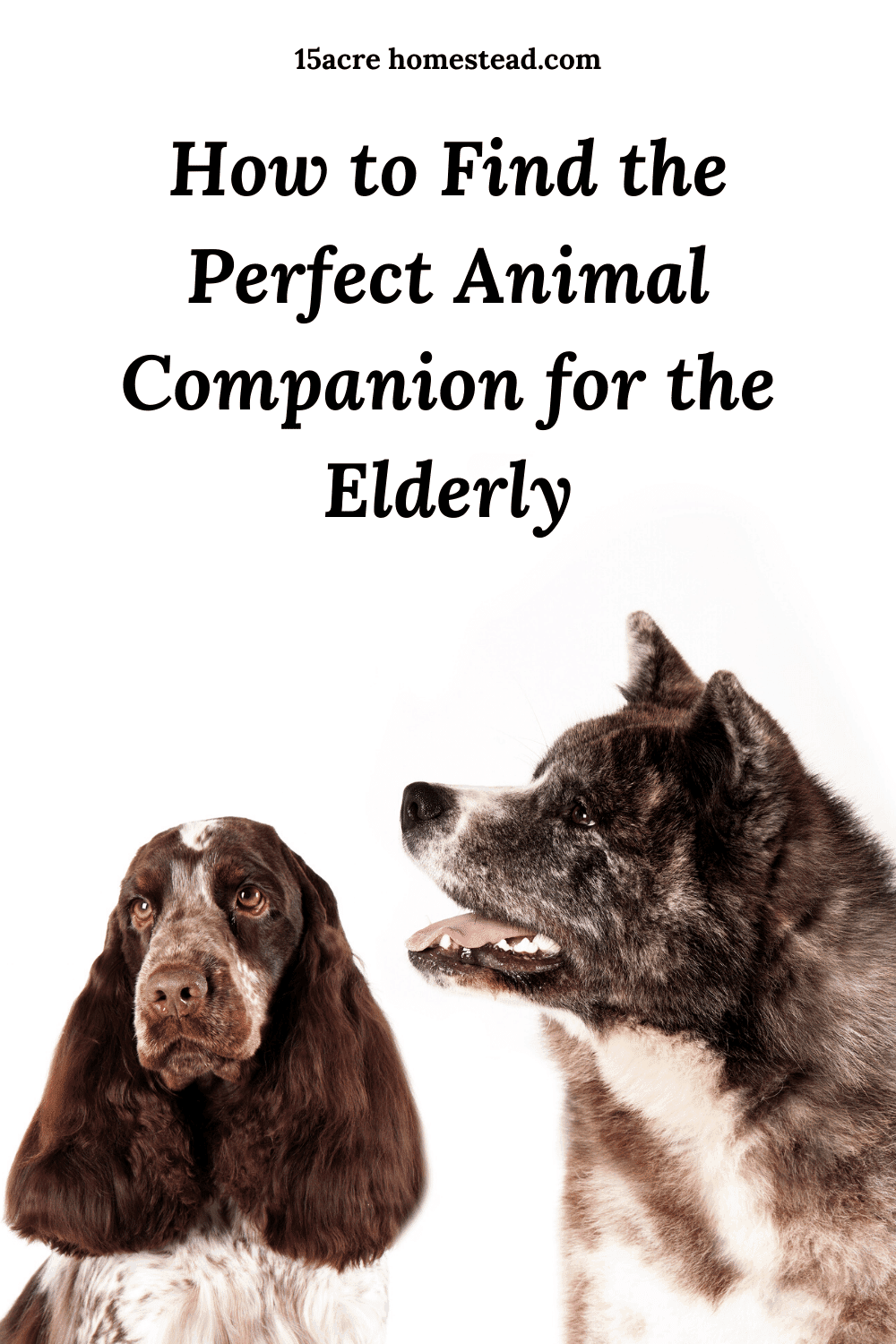 Finding the right companion for the elderly can be easy when you follow these tips.