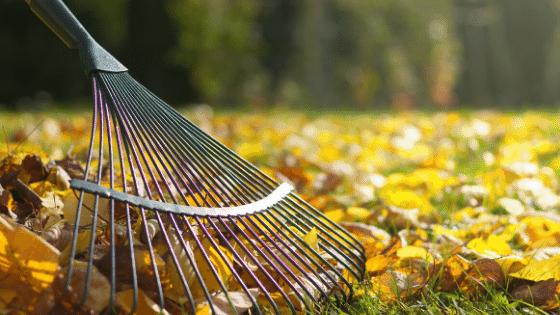 Raking the leaves.