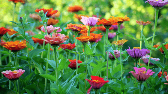 breathe life in your garden feature post