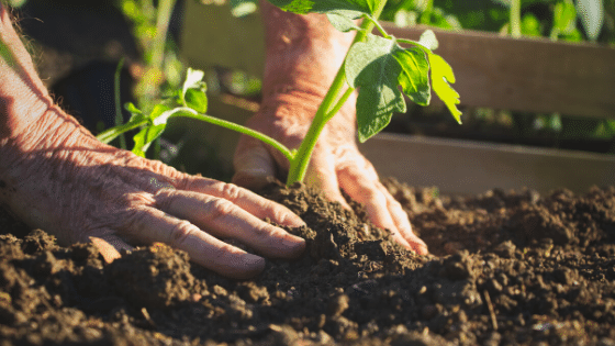 Planting food is a great way to use your garden space wisely.