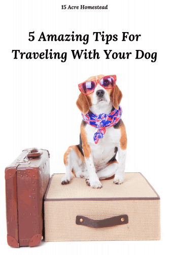 We all love our pets, but traveling with them can be difficult. These tips will help you to be able to travel with your dog safely and enjoyably.