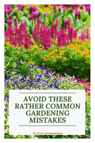 Are you setting up a new garden? Here are some great tips to help you avoid those common mistakes that gardeners make.