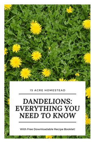 Read everything you could need to know about dandelions and receive a free booklet with recipes made from dandelions.