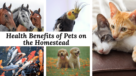 Homesteading has so many beneficial aspects for you and your family. Owning pets on your homestead can actually benefit your overall health! Learn more here.