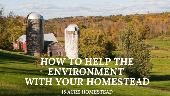 How To Help The Environment featured image