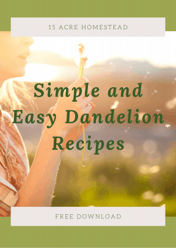 Simple and Easy Dandelion Recipes free ebook cover