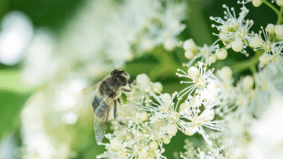 Allowing bees to pollinate can help overcome many gardening mistakes