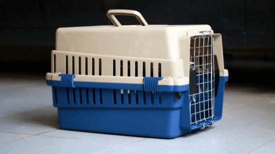 A dog carrier