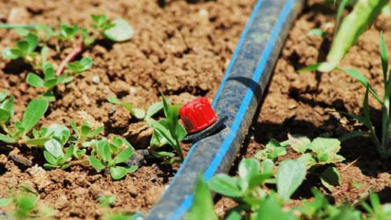 drip irrigation used to avoid one the common gardening mistakes of overwatering.