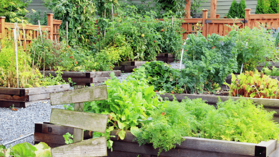 vegetable gardens in shade are on of the most common gardening mistakes..