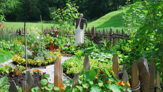 vegetable gardens are one way homesteaders are prepared for quarantine