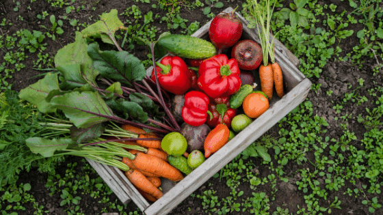 Vegetables grown at home