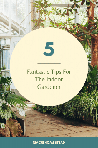 Every indoor gardener knows that gardening inside is not easy. These 5 tips should help you be more successful!