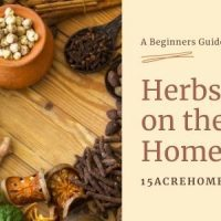 Herbs on the Homestead: an Important Introduction for the Beginner