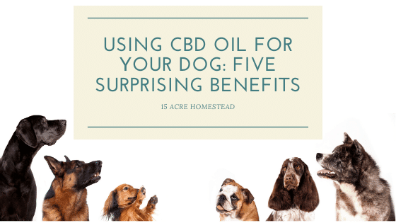 As pet parents, it's the need of the hour to see using CBD oil for your dog as a novel solution for a host of problems that they face in their lifetime of service, loyalty, and companionship.