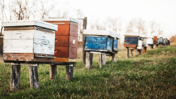 Protect beehives by placing them in the sun.