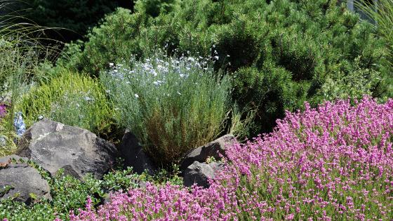 Prepare your yard for a drought tolerant landscape.