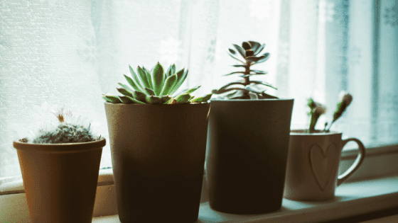 An indoor gardener will use the windows as a place to house plants in their home.