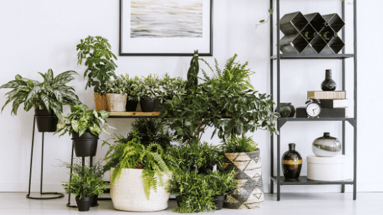The idea of being an indoor gardener has appeal to many people.
