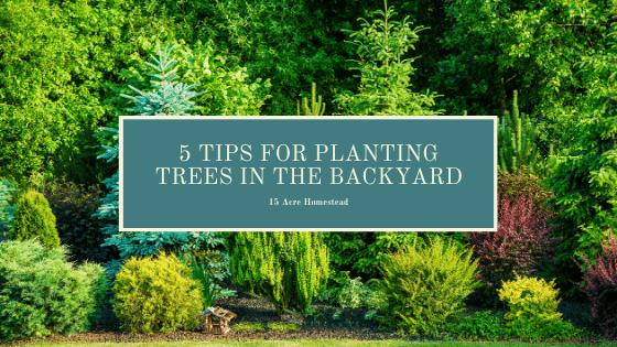 Planting trees image