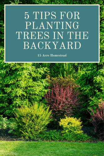 If you are thinking of giving your backyard a new life by planting trees, the following are a few tips and tricks you can use to help you transform your backyard.