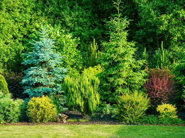 Trees planted along the perimeter of a backyard