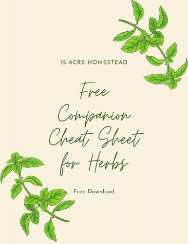 Herb Companion Sheet