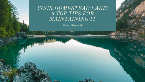 If you're looking for guidance when it comes to maintaining your homestead lake then don't worry, you have definitely come to the right place.