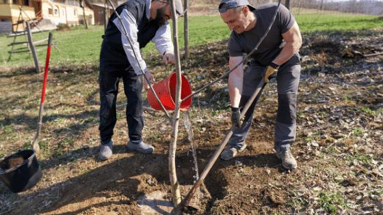 Professional landscaper planting a tree