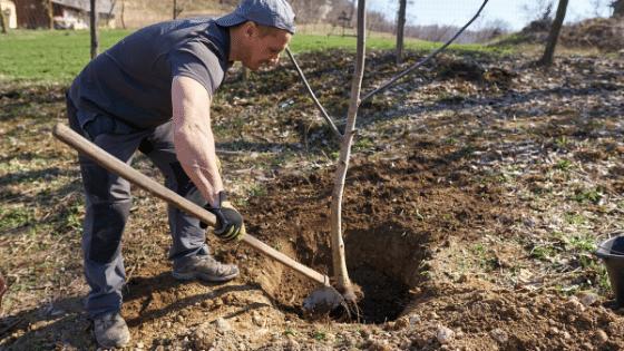 Using the native soil.