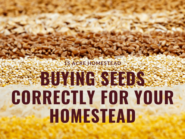 Buying seeds feature image
