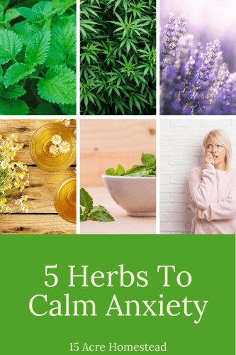 Do you suffer from anxiety? Try these 5 herbs to calm anxiety without any harmful effects!