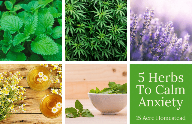 herbs to calm anxiety featured image