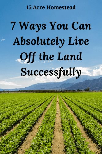 Use these tips to start homesteading and learn how to successfully live off the land!