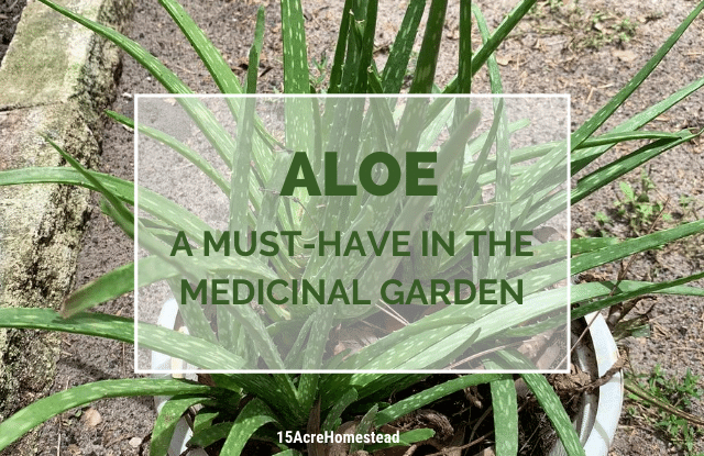 Aloe featured image