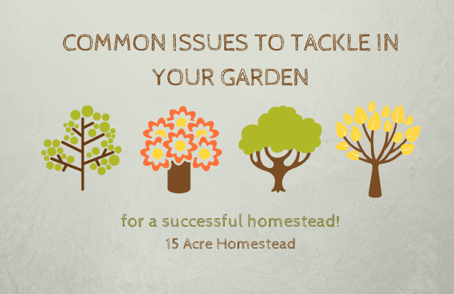 Common Garden Issues featured image