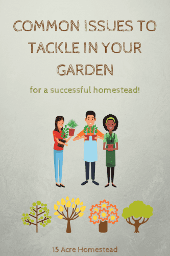 Make sure you address these common garden issues immediately if you want to have a successful garden on your homestead.