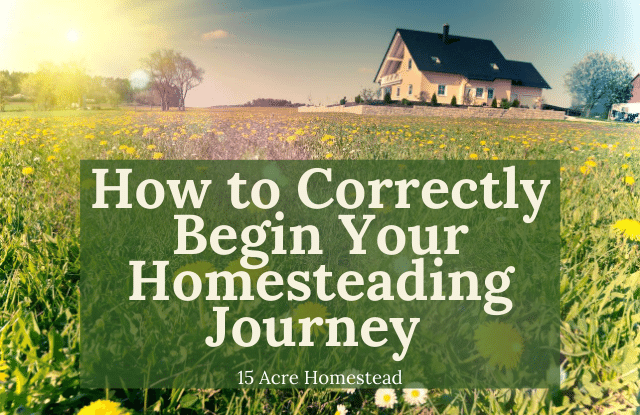 Begin your homesteading journey featured image