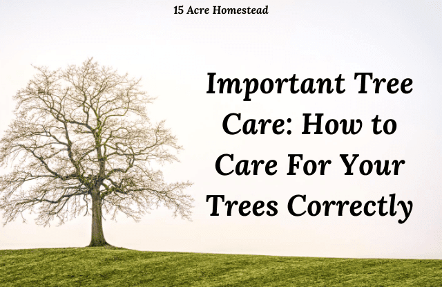 Tree Care featured image